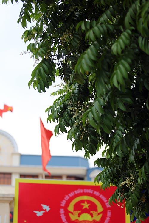 ha noi diu dang huong hoa sau dau ha - 7