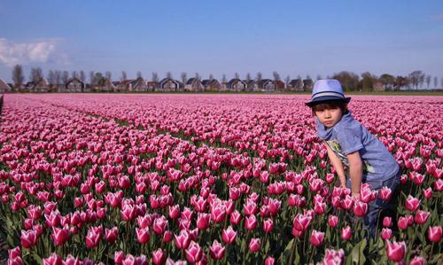 Hai thiên thần lai gốc Việt bên cánh đồng hoa Tulip đẹp như tranh-9