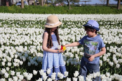 Hai thiên thần lai gốc Việt bên cánh đồng hoa Tulip đẹp như tranh-11