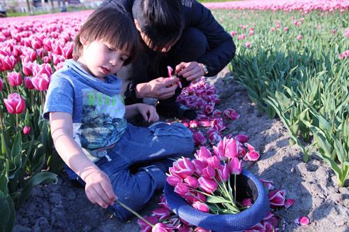 Hai thiên thần lai gốc Việt bên cánh đồng hoa Tulip đẹp như tranh-16