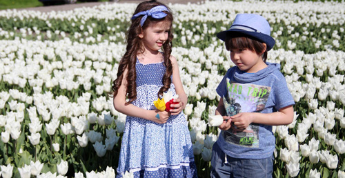 Hai thiên thần lai gốc Việt bên cánh đồng hoa Tulip đẹp như tranh-6
