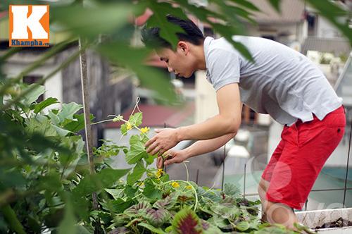 Chàng trai nuôi lợn, gà và trồng rau sạch giữa Thủ đô-4