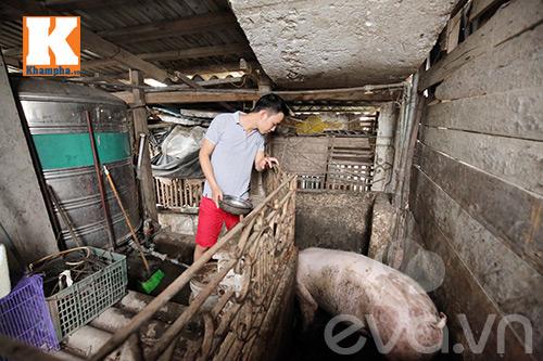 Chàng trai nuôi lợn, gà và trồng rau sạch giữa Thủ đô-14