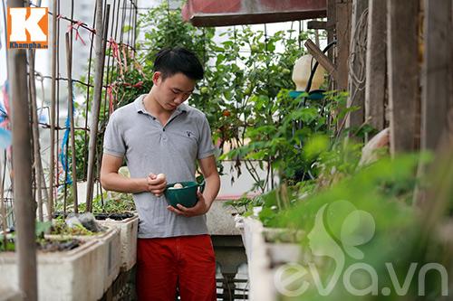 Chàng trai nuôi lợn, gà và trồng rau sạch giữa Thủ đô-13