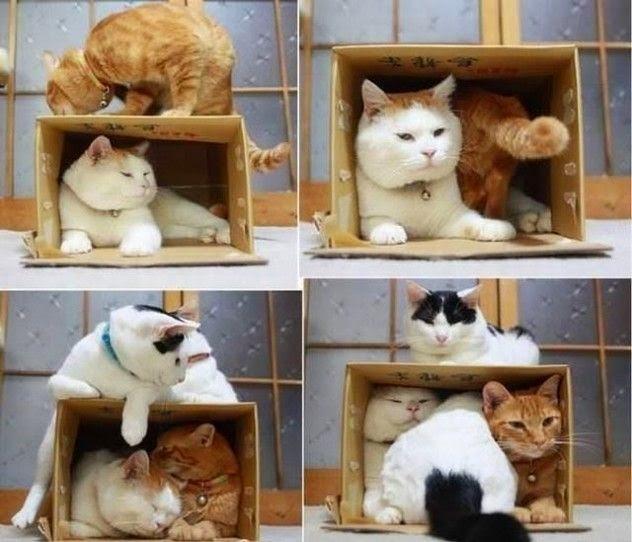 Kết quả hình ảnh cho hộp giấy cho mèo