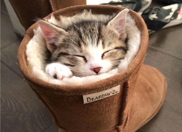 Lí do mèo thích ních thân mình ngủ trong hộp bé tí-3