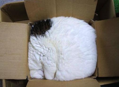 Lí do mèo thích ních thân mình ngủ trong hộp bé tí-2