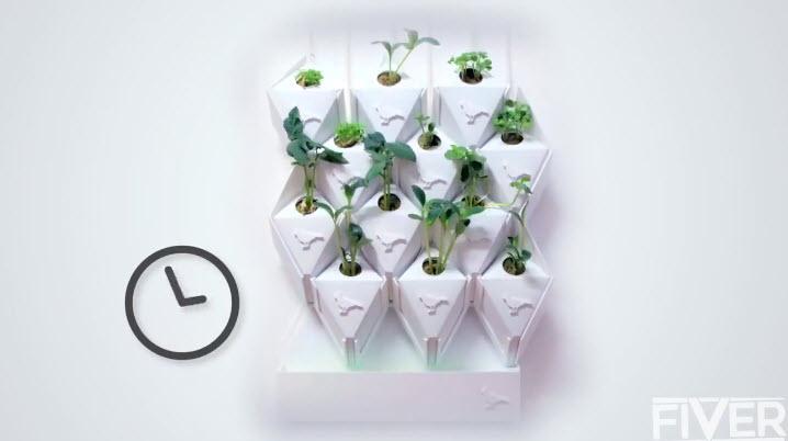Vườn rau treo trên tường thích hợp cho nhà phố-3