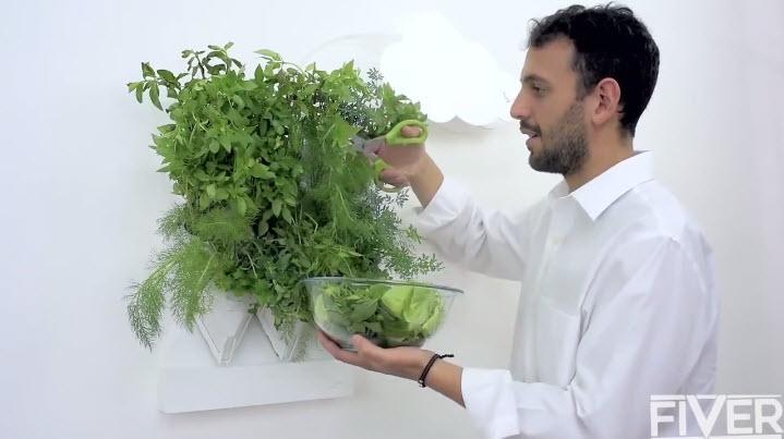 Vườn rau treo trên tường thích hợp cho nhà phố-4