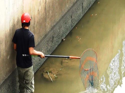 Cá lại chết trên kênh Nhiêu Lộc sau cơn mưa-6
