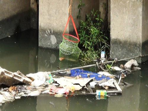 Cá lại chết trên kênh Nhiêu Lộc sau cơn mưa-7
