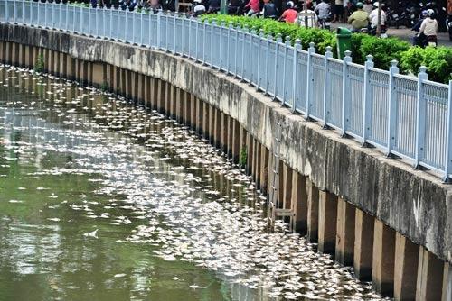 TPHCM công bố nguyên nhân cá chết trắng kênh Nhiêu Lộc-2