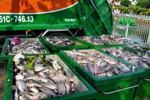 TPHCM công bố nguyên nhân cá chết trắng kênh Nhiêu Lộc-5