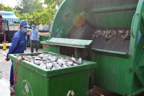 TPHCM công bố nguyên nhân cá chết trắng kênh Nhiêu Lộc-6