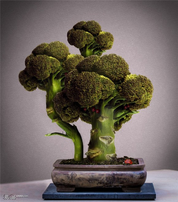 me man bien tau bonsai trong tu rau, cu, qua - 1