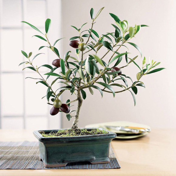 me man bien tau bonsai trong tu rau, cu, qua - 4