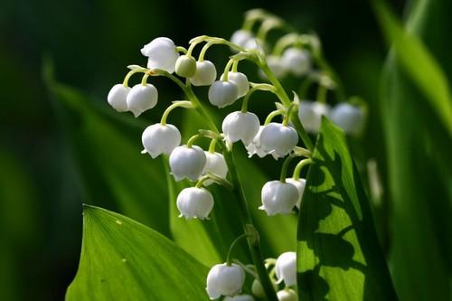 """10 loài hoa đắt đỏ, """"hiếm có khó tìm"""" nhất trên thế giới - 2"""