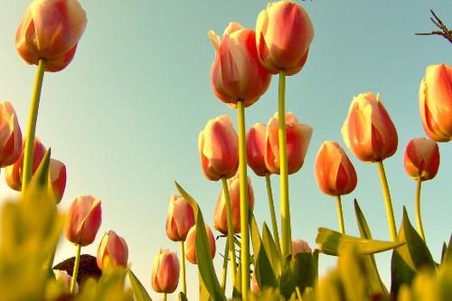 """10 loài hoa đắt đỏ, """"hiếm có khó tìm"""" nhất trên thế giới - 5"""