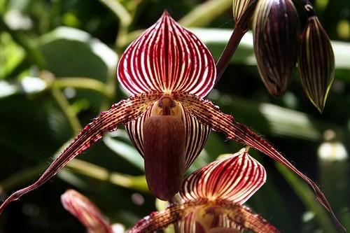 """10 loài hoa đắt đỏ, """"hiếm có khó tìm"""" nhất trên thế giới - 7"""