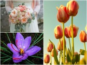 """Nhà đẹp - 10 loài hoa đắt đỏ, """"hiếm có khó tìm"""" nhất trên thế giới"""
