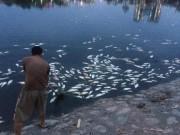 Tin tức - Hà Nội: Cá chết hàng loạt nổi trắng hồ Hoàng Cầu