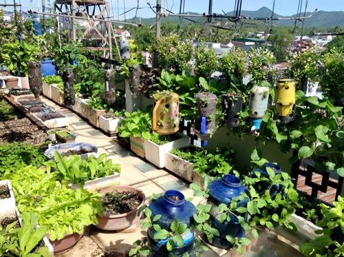 Ngó vườn rau độc trồng trong mũ bảo hiểm, bình cứu hỏa-6