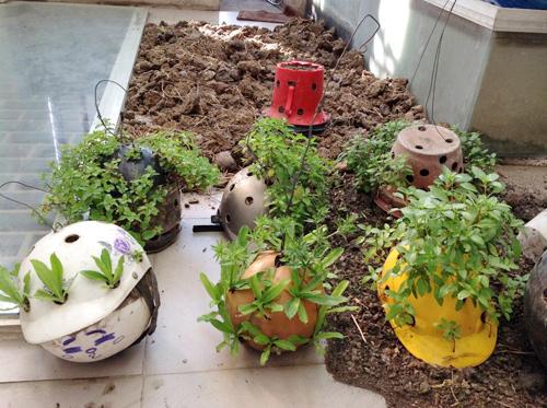 Ngó vườn rau độc trồng trong mũ bảo hiểm, bình cứu hỏa-4