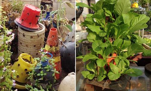 Ngó vườn rau độc trồng trong mũ bảo hiểm, bình cứu hỏa-11
