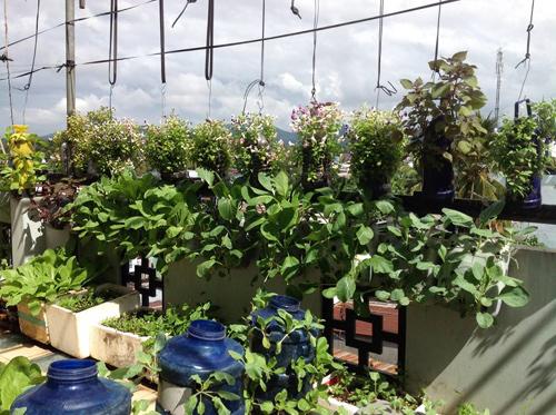 Ngó vườn rau độc trồng trong mũ bảo hiểm, bình cứu hỏa-22