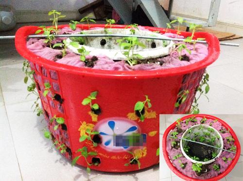 Ngó vườn rau độc trồng trong mũ bảo hiểm, bình cứu hỏa-8