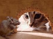 Làm mẹ - Truyện cổ tích: Sự tích mèo và chuột