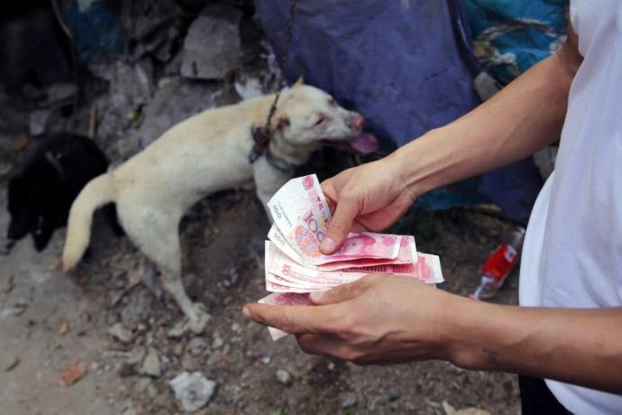 xot thuong 10.000 chu cho cho chet tai le hoi thit cho trung quoc - 10