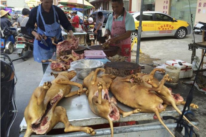 xot thuong 10.000 chu cho cho chet tai le hoi thit cho trung quoc - 2