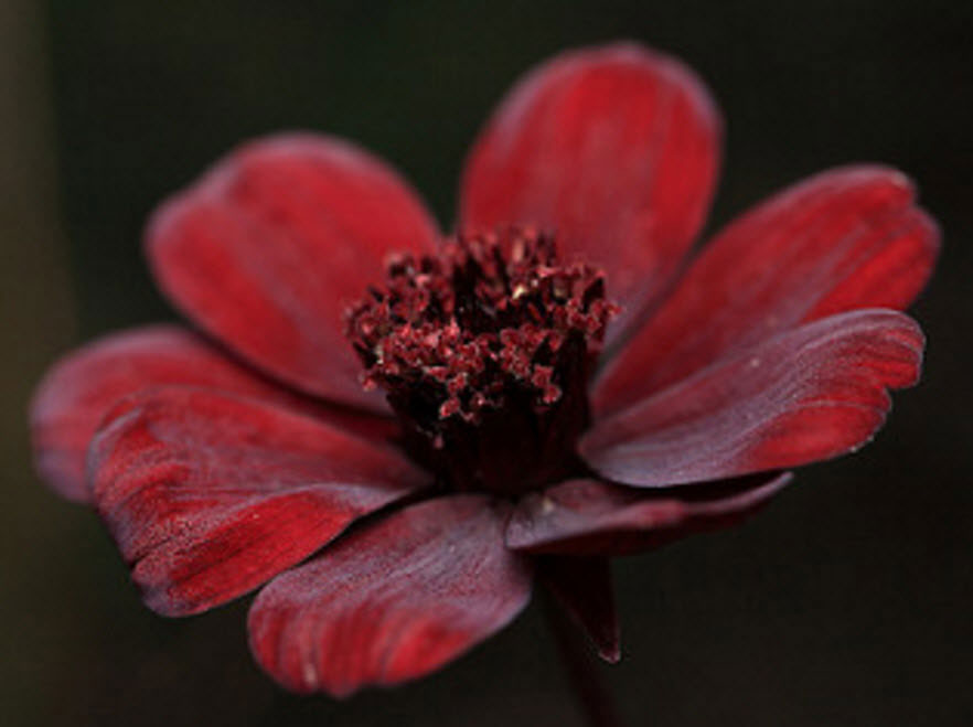 10 loai hoa nen trong giup nha thom ngat ngay - 6