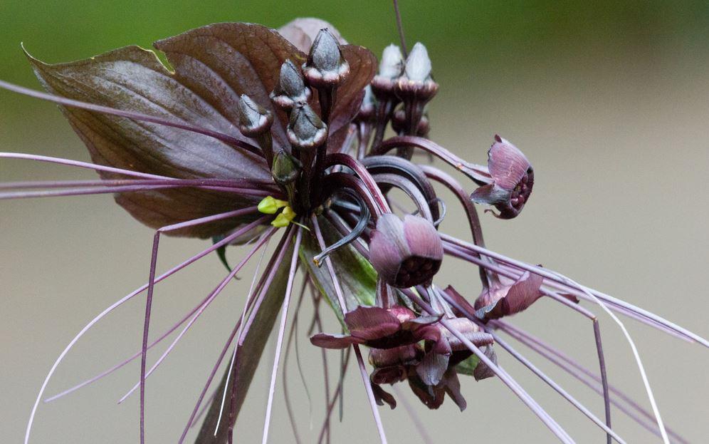 Top 10 loài hoa có vẻ ngoài khiến con người sững sờ-1