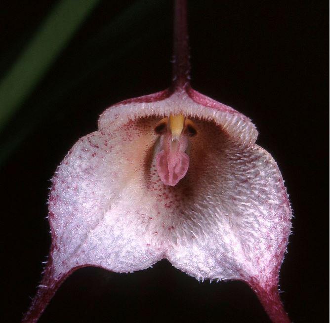 Top 10 loài hoa có vẻ ngoài khiến con người sững sờ-10