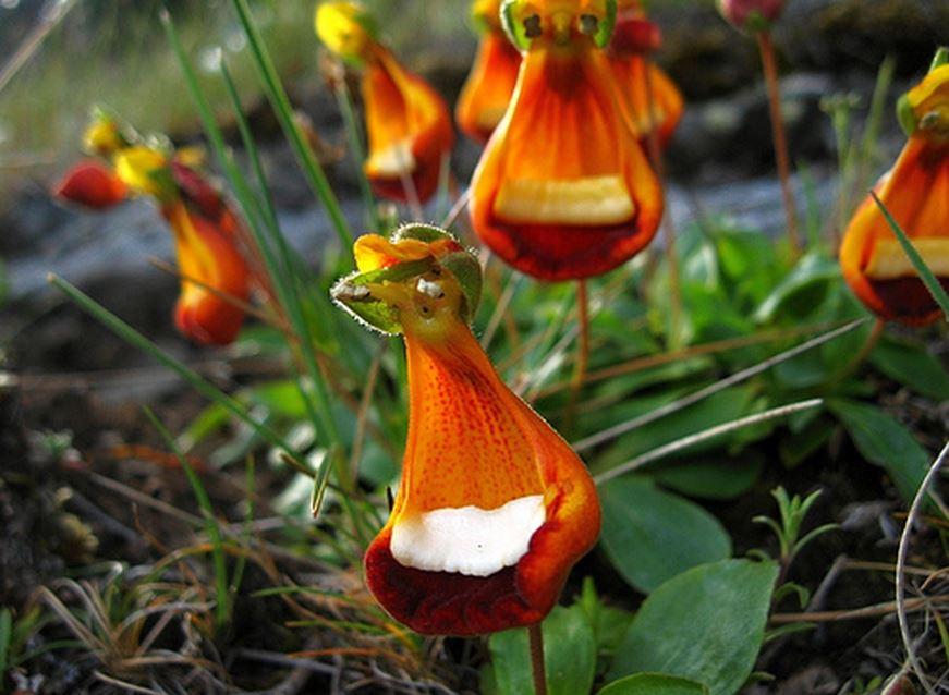 Top 10 loài hoa có vẻ ngoài khiến con người sững sờ-2