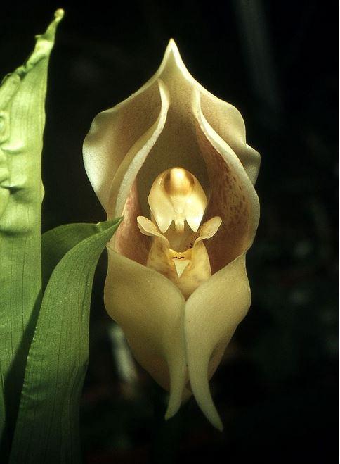 Top 10 loài hoa có vẻ ngoài khiến con người sững sờ-3