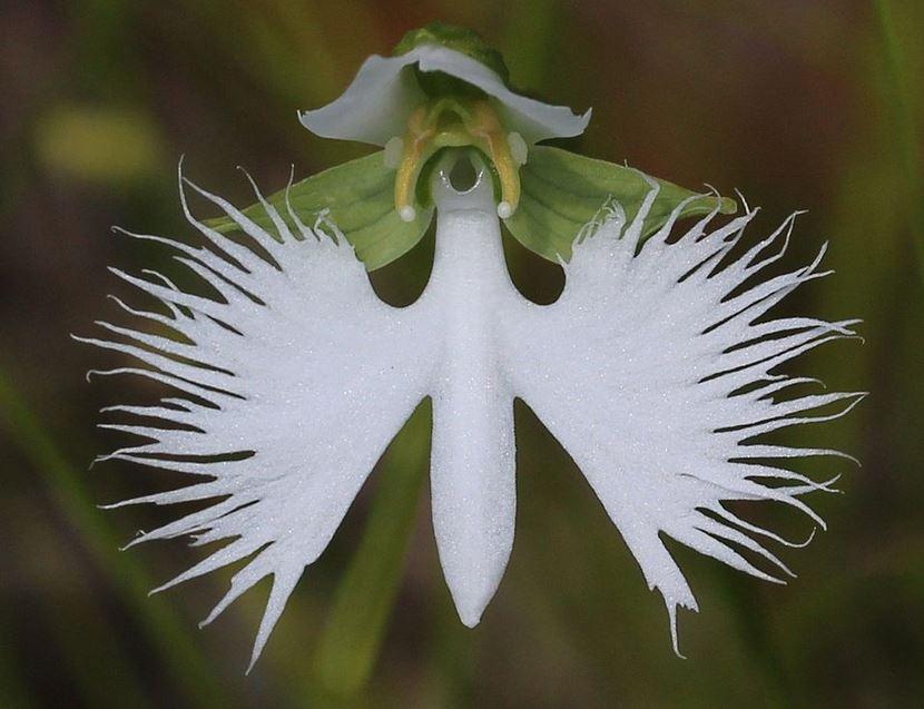 Top 10 loài hoa có vẻ ngoài khiến con người sững sờ-4