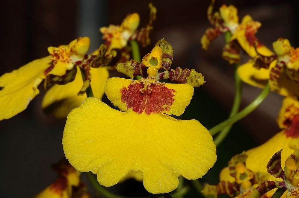 Top 10 loài hoa có vẻ ngoài khiến con người sững sờ-5