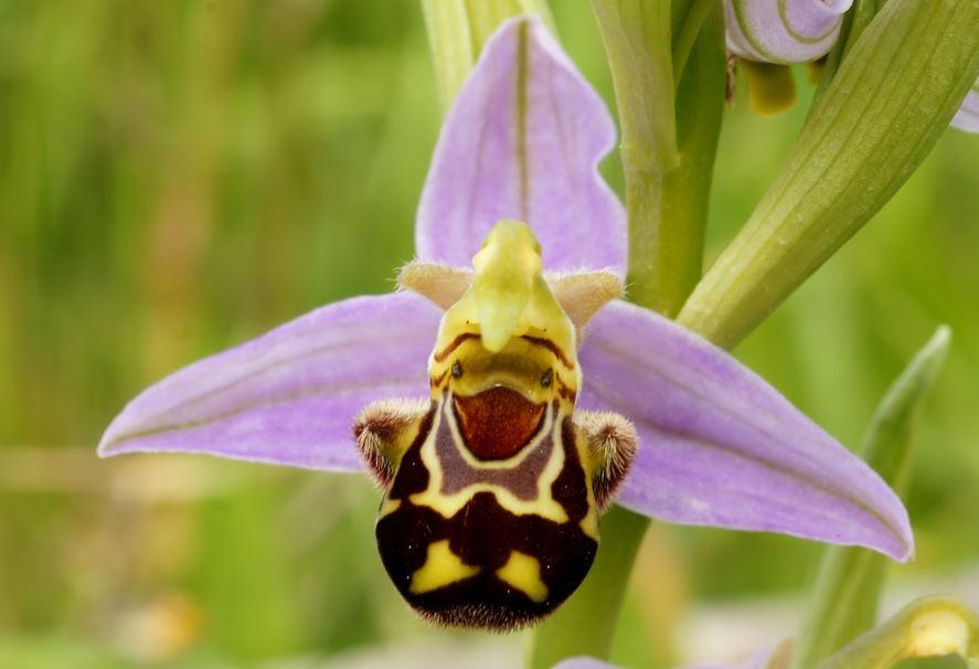 Top 10 loài hoa có vẻ ngoài khiến con người sững sờ-9