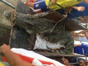 Tin tức - Bắt được cá sấu hơn 70kg ở hồ câu nổi tiếng Hà Nội