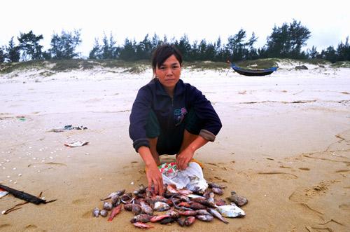 Toàn cảnh vụ cá chết hàng loạt ở miền Trung-2