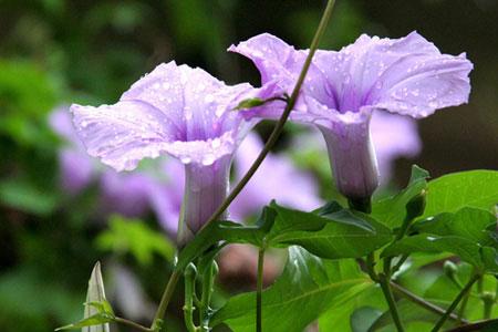 Vẻ đẹp lạ kỳ của những bông hoa dại - 1