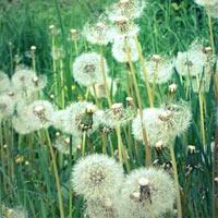Vẻ đẹp lạ kỳ của những bông hoa dại