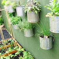 Tươi rói vườn rau trong nhà phố