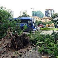 Hà Nội xác xơ sau mưa bão số 5