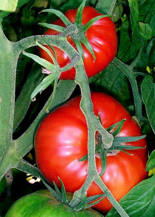 7 cách trắng da bất ngờ với cà chua - 2