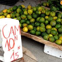 Bóc trần bí mật cam siêu rẻ giá 10.000 đồng/kg