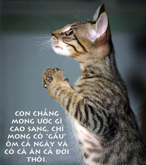 anh dong vat hai: xem & cuoi dau ruot - 10